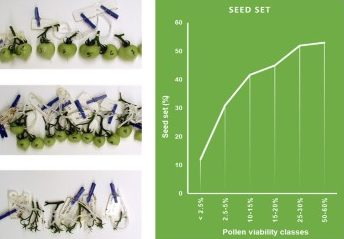 Graph showing the correlation of Pollen Viability and Seed Set in Tomato