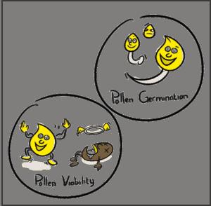 Pollen Germination vs. Pollen Viability Analysis