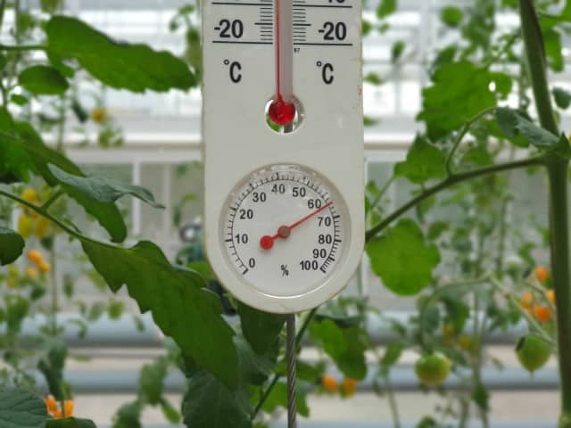 A thermometer in a tomato greenhouse