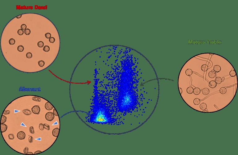 Visualization of mature viable, mature dead and aberrant tomato pollen
