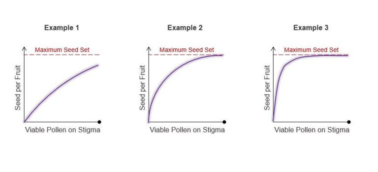 Visualization of varying correlation between pollen viability and seed set per tomato line