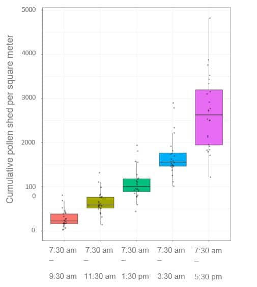 Illustration of cumulative wheat pollen shed behaviour